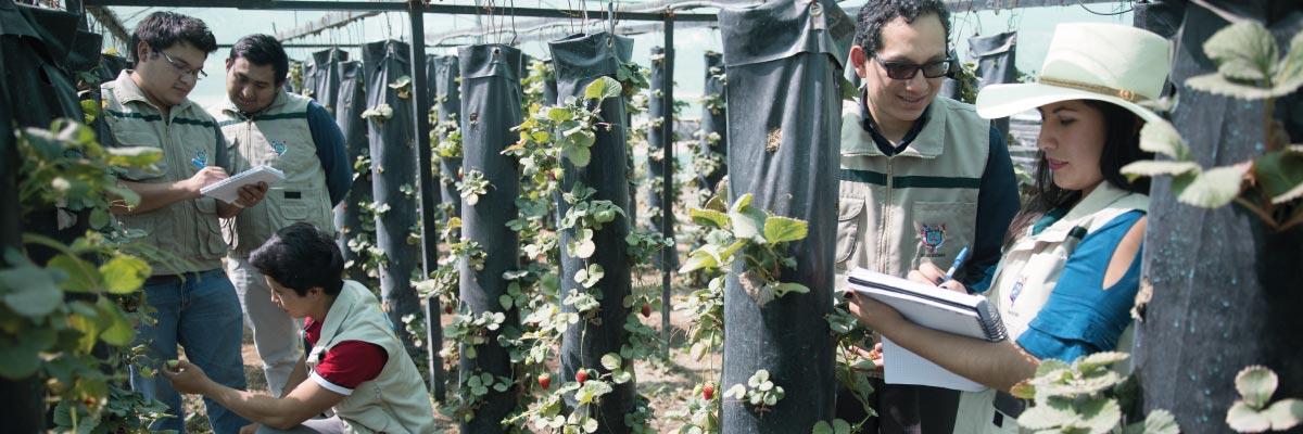 ing-agronomica-ucsm-web-ucsm