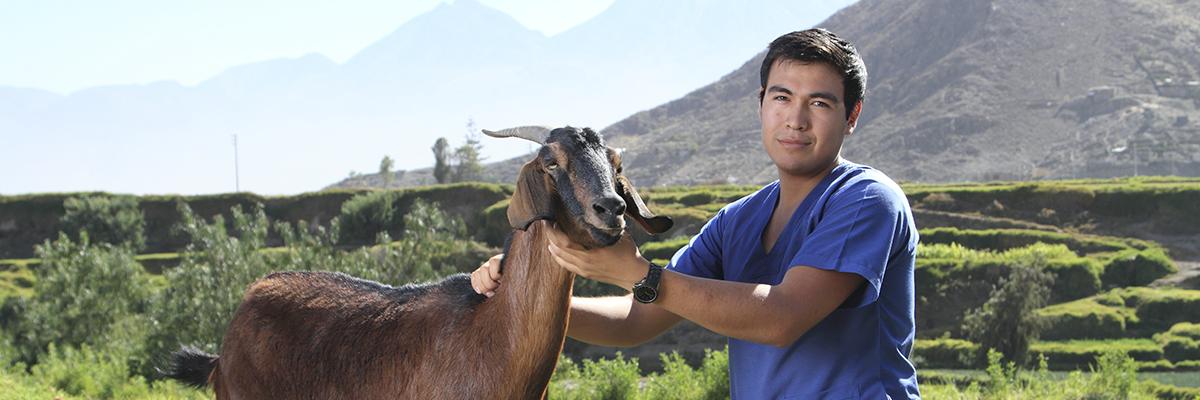 ucsm_medicina_veterinaria_zootecnia