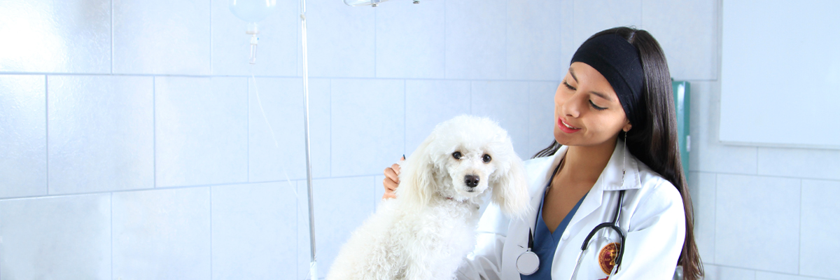 clinica_veterinaria