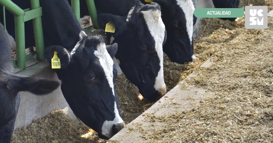 vacas-inseminacion-01