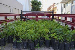 plantones_0002_img_9992