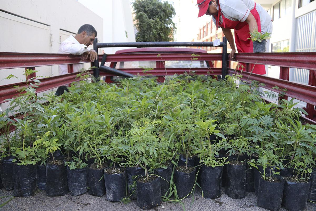 ucsm-y-el-proyecto-arequipa-ciudad-verde-en-lo-que-va-del-ano-dono-1525-arbolitos-en-beneficio-de-la-comunidad_0001_im