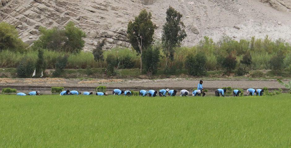 en-ucsm-analizan-soluciones-para-derrumbes-en-valles-de-vitor-y-tambo-por-las-irrigaciones-en-las-zonas-altas