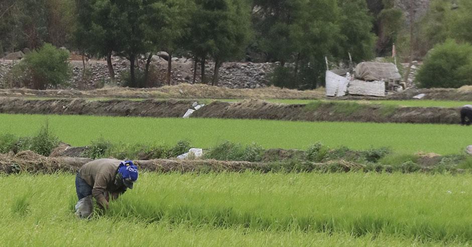 majes-siguas-ii-tiene-mas-38-mil-500-hectareas-y-generaria-una-rentabilidad-anual-de-tres-mil-millones-de-dolares