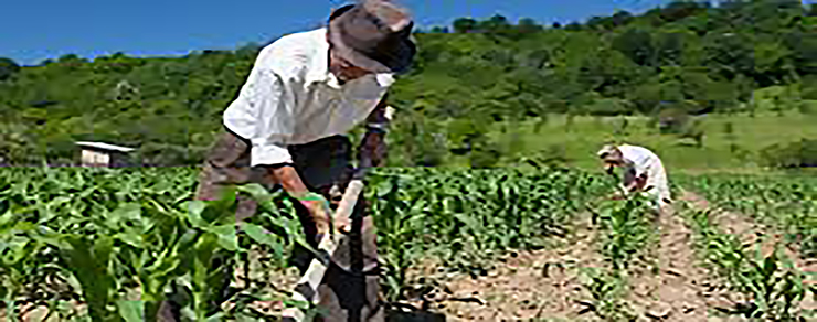 ucsm-el-6-del-pbi-del-peru-lo-aporta-el-sector-agrario-pese-a-estar-relegado-por-el-estado-portada