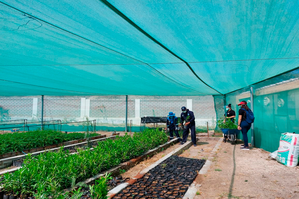 ucsm-impulsa-reforestacion-en-characato-con-la-entrega-de-200-plantones-2