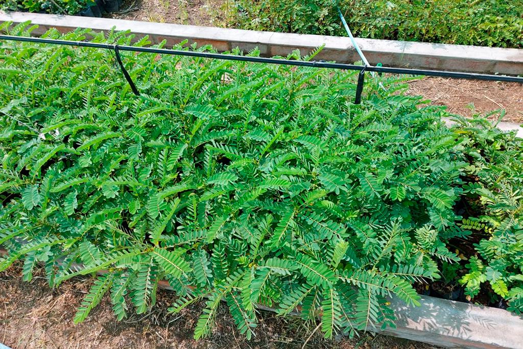 ucsm-impulsa-reforestacion-en-characato-con-la-entrega-de-200-plantones-3