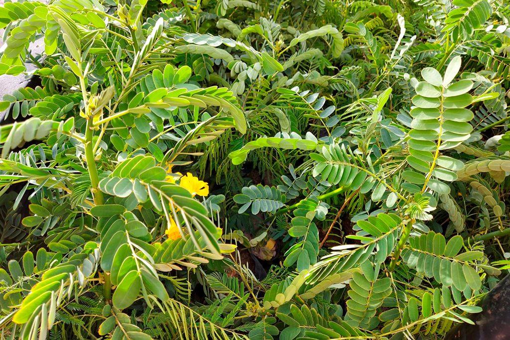 ucsm-inicia-campana-de-arborizacion-en-islay-con-la-entrega-de-400-arbolitos-1
